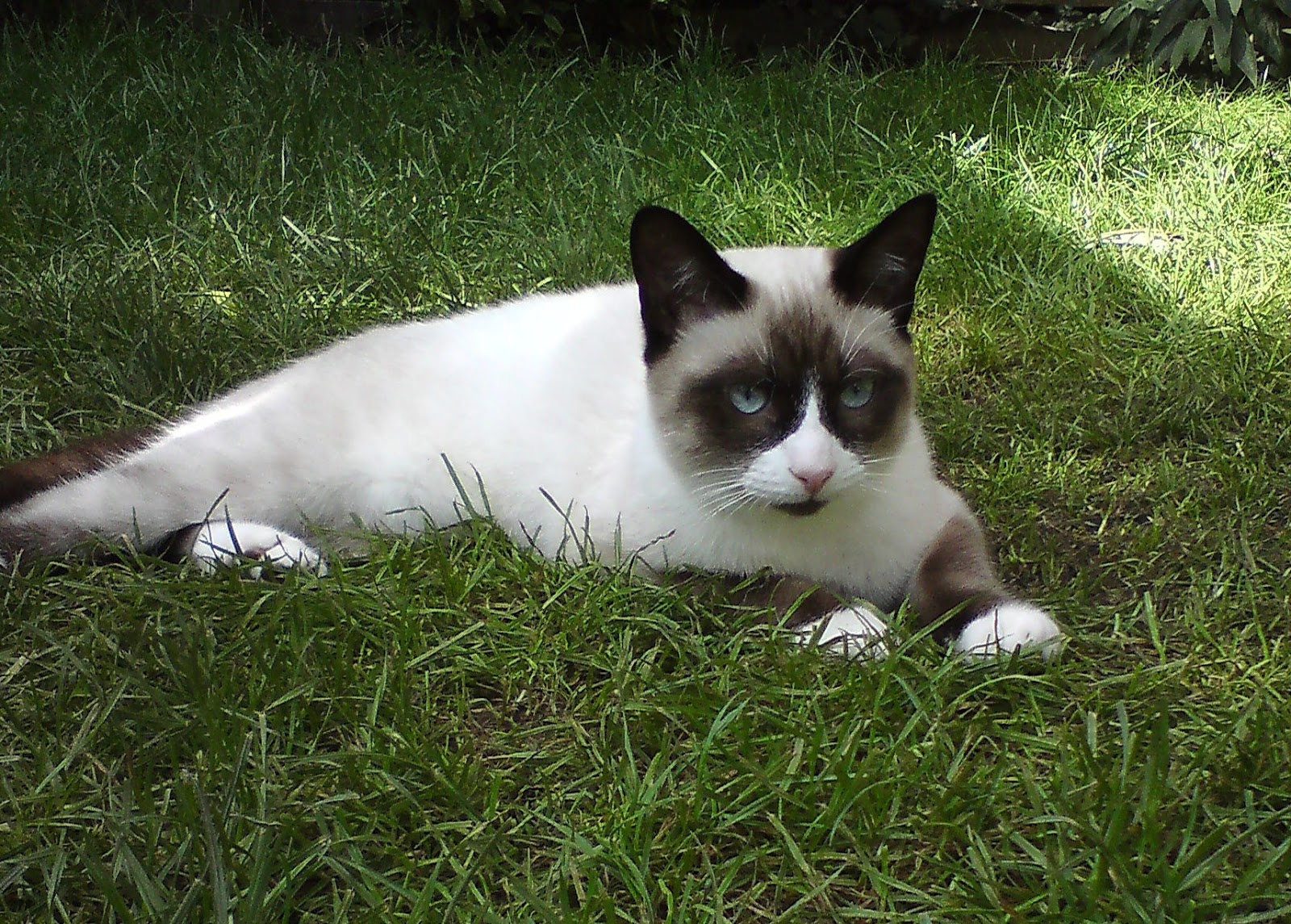 Snowshoe The Life Of Animals