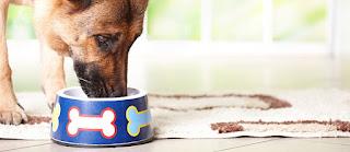 Alternatives pour aliments pour chiens commerciaux