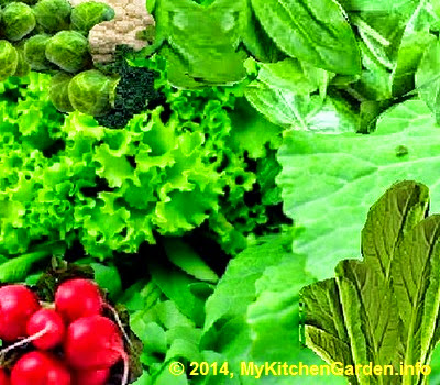 Dark green vegetables like broccoli, cabbage, cauliflower, radish greens, turnip, Brussels sprouts, watercress