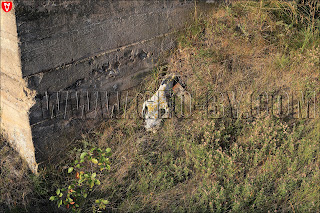 череп животного у немецкого бункера