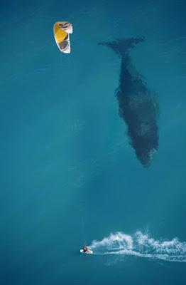 Foto tomada en el momento exacto en el mar