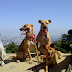 Rent A Dog For Your Hike In Hollywood