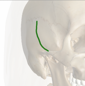 La ranura para la arteria temporal media