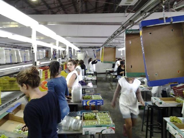 Ζητείται προσωπικό σε συσκευαστήριο στην Αγία Τριάδα του Δήμου Ναυπλιέων