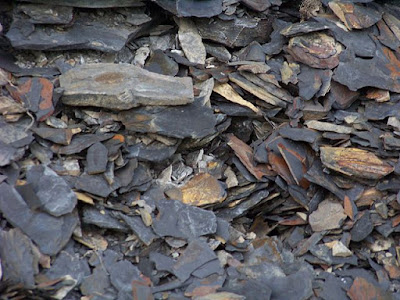 Research and the Genesis Flood indicate mudstone does not need millions of years to form