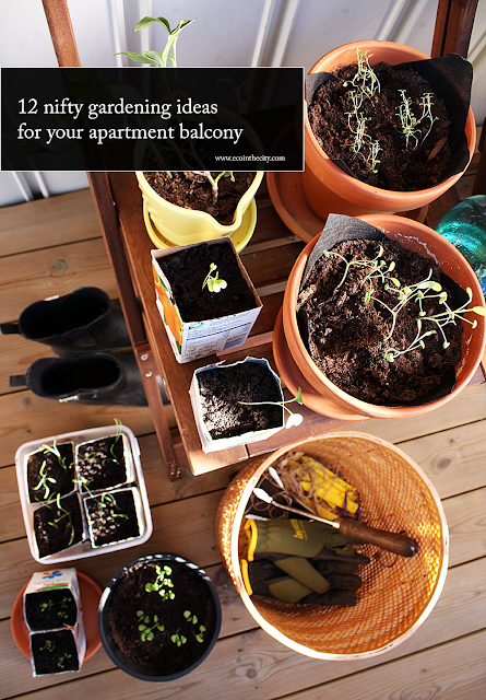 Ideas and inspiration for the edible apartment balcony garden