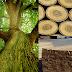 Khung sofa thường làm bằng gỗ gì?