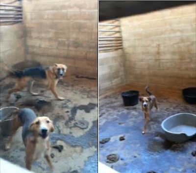Otro centro en Andalucía investigado por el estado en el que tienen a los perros
