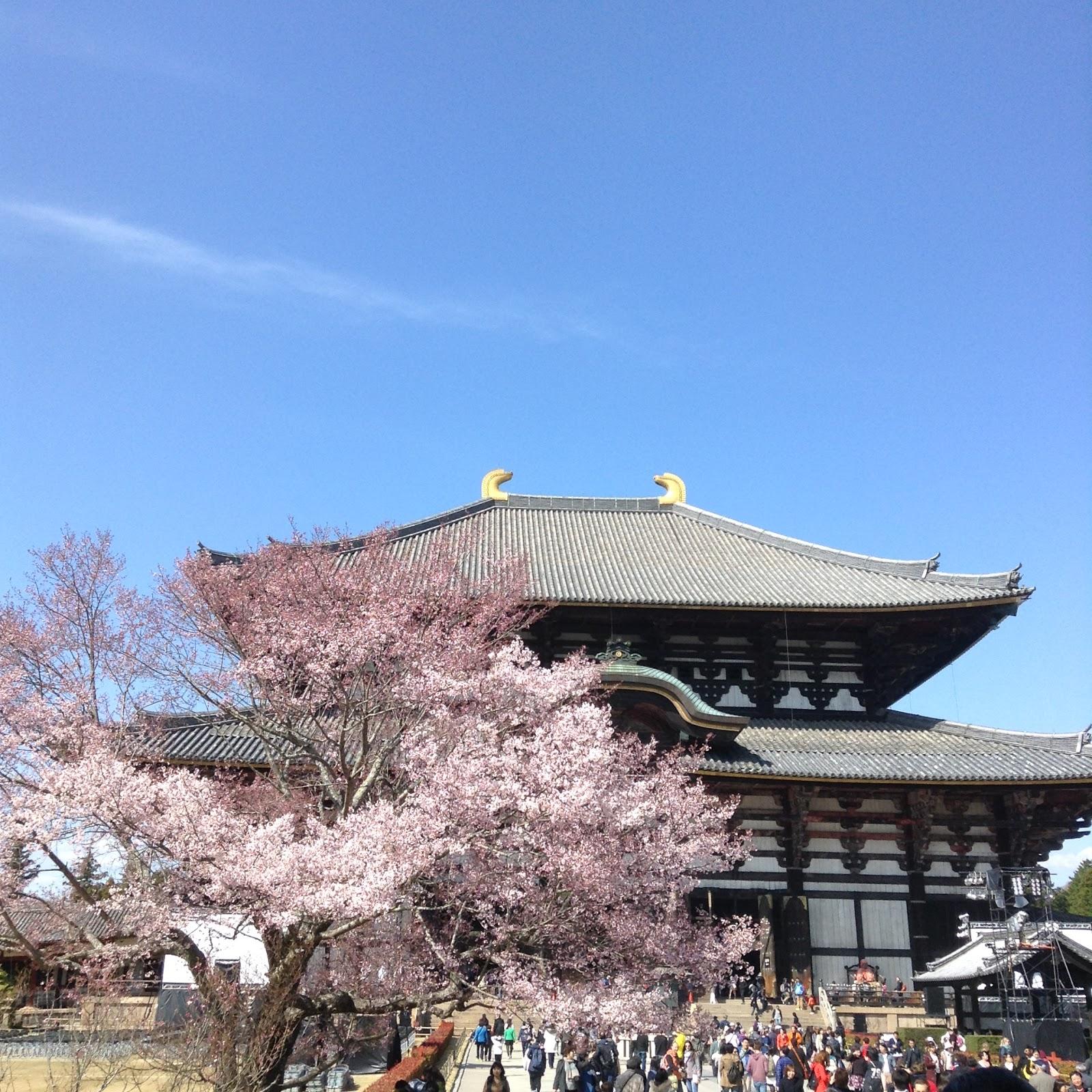 Nara Todaiji Sakura