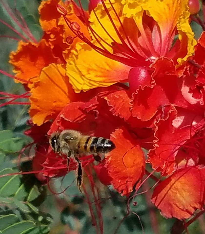 the disappearance of the bees Vanishing of the bees - known as colony collapse disorder, honeybees have been mysteriously disappearing across the planet, literally vanishing from their hives vanishing of the bees follows commercial beekeepers as they strive to keep their bees healthy.