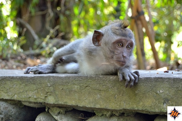 Ubud, Sacred Monkey Forest Sanctuary