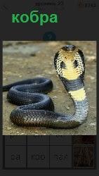 460 слов 4 кобра встала в стойку 23 уровень