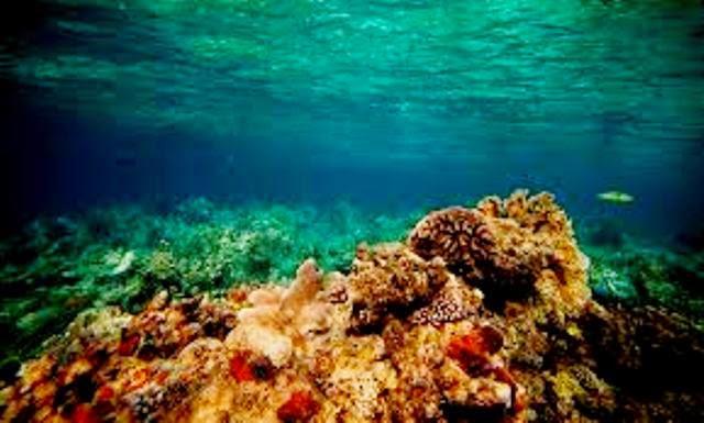 tubbataha-reefs-photo