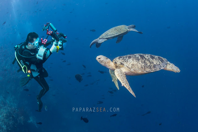 Underwater Photography, How to get to Sipadan, PADI Courses, Learn Scuba, Underwater Photography  Manila, Travel Sipadan, Martine Park Fee, Sipadan Dive Permit, Diving Asia, Dive the World, PaparazSea
