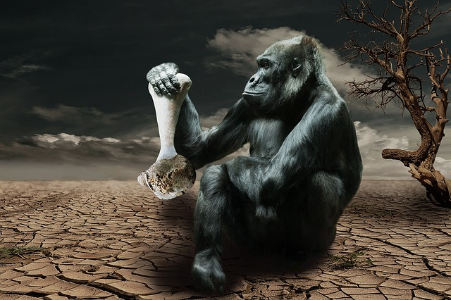 Gorilla Looking at an Animal Bone with No Meat on It