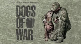Perang-Konyol-Karena-Anjing-Liar
