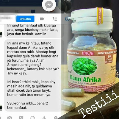 Obat Diabetes Alami HERBAL Daun Afrika
