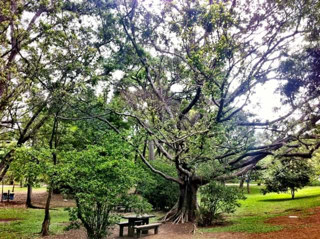 Parque Ibirapuera Área de Piquenique