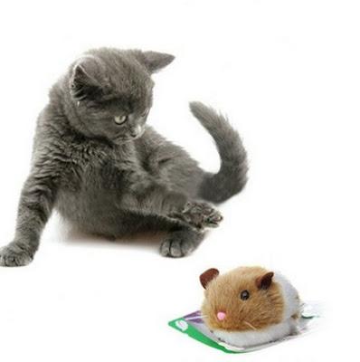 Mainan untuk Kucing yang menarik dan lucu
