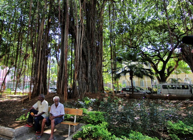 Jardín de la Compañía en Port Louis, Isla Mauricio