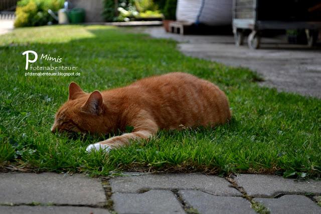 Katze Mimi liegt faul im Garten und genießt den Sommer