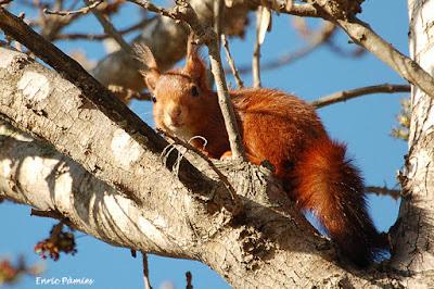 Ardilla sobre un árbol