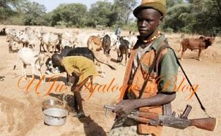 Herdsmen allegedly go haywire, destroy Unilorin's multi-million naira farm and poison dam with chemicals