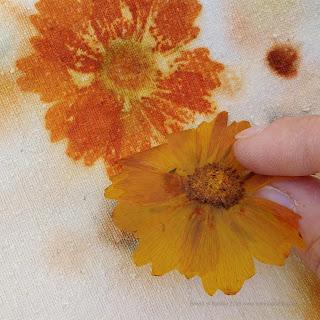 corso corsi ecoprint ecoprinting tintura naturale stampa vegetale