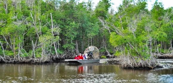 Airboat Tour durch Mangroven um Alligatoren zu sehen