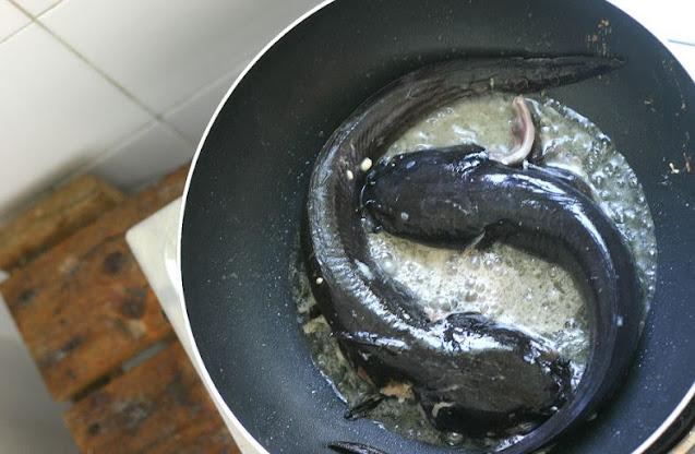 hewan beracun yang dikonsumsi