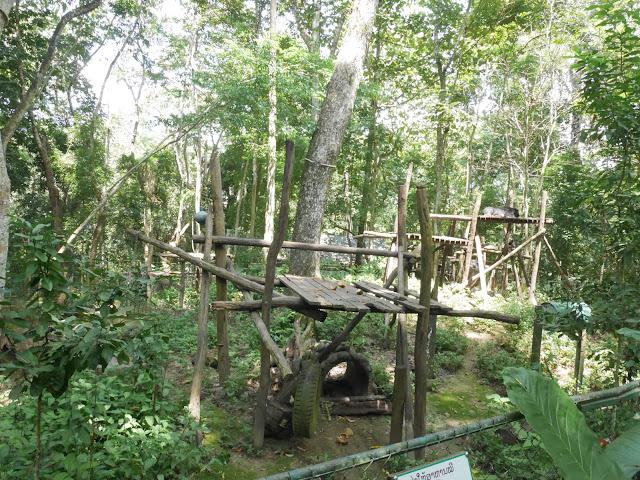 bear habitat in luang prabang, laos