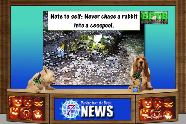 BFTB NETWoof Dog News ~ Stay away from open cesspools