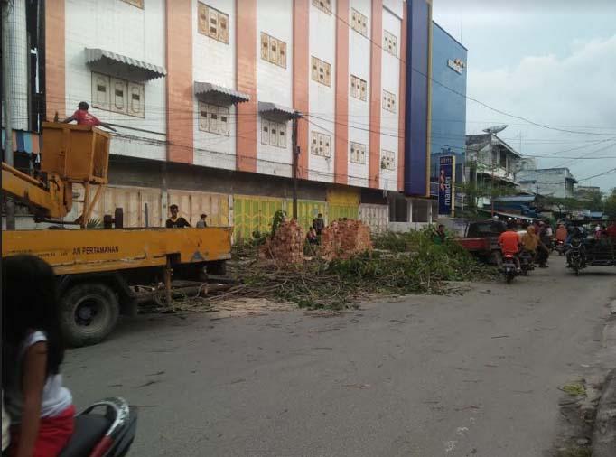 Penebangan pohon pelindung di pinggir jalan di Kota Tanjungbalai.