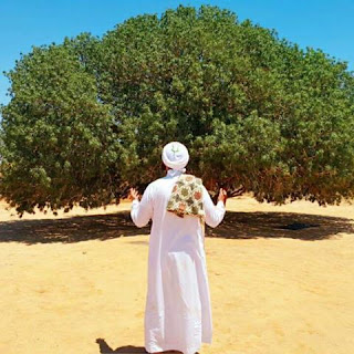 Pohon Sahabi Dizaman Rasulullah s.a.w
