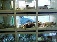 Escaparate Tienda de Animales o Mascotas