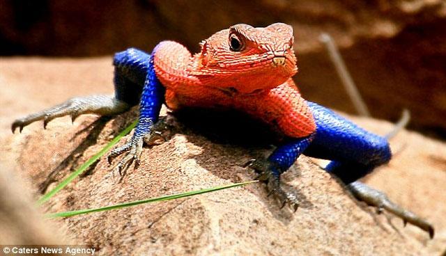 Reptil Aneh Yang Jarang Orang Lihat Apalagi Miliki