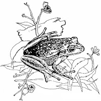 Frogs of the Illawarra