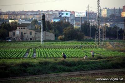 Salvar Cal Trabal, la última zona agrícola de L'Hospitalet, no es por gusto.