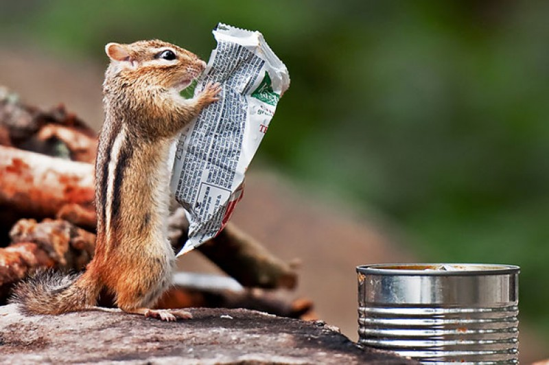 Morning Paper is not only for Humans