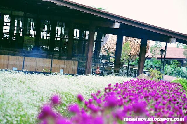 bunga lavender di dusun bambu lembang