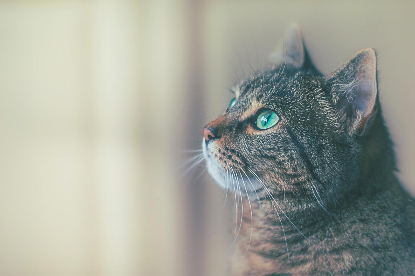 【我是貓】第一章 (五) 夏目漱石