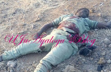 Army Ambushes Boko Haram Bomb Expert, Recovers 200 Cows ....See Photos