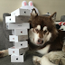 Son of China's richest man buys 8 iPhone 7s for his dog(Photos)