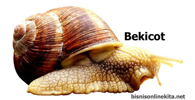 bekicot