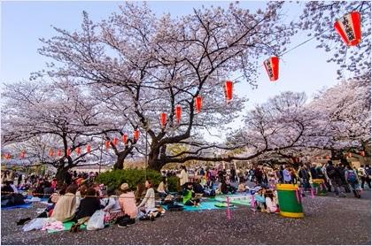 ชมซากุระในสวนอุเอโนะ (Ueno Park)