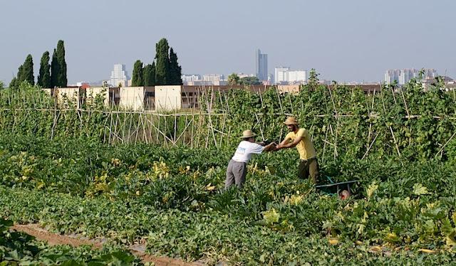 http://agroicultura.com/general/la-reguerta-de-gines-ecollaures-de-vlencia-y-mercats-de-la-terra-de-alicante/