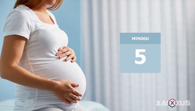 10 Fakta Kehamilan dan Janin Usia 5 Minggu Yang Harus Diketahui Oleh Ibu Hamil