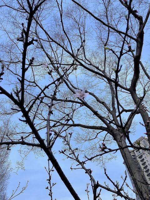 寂しげな梅の花