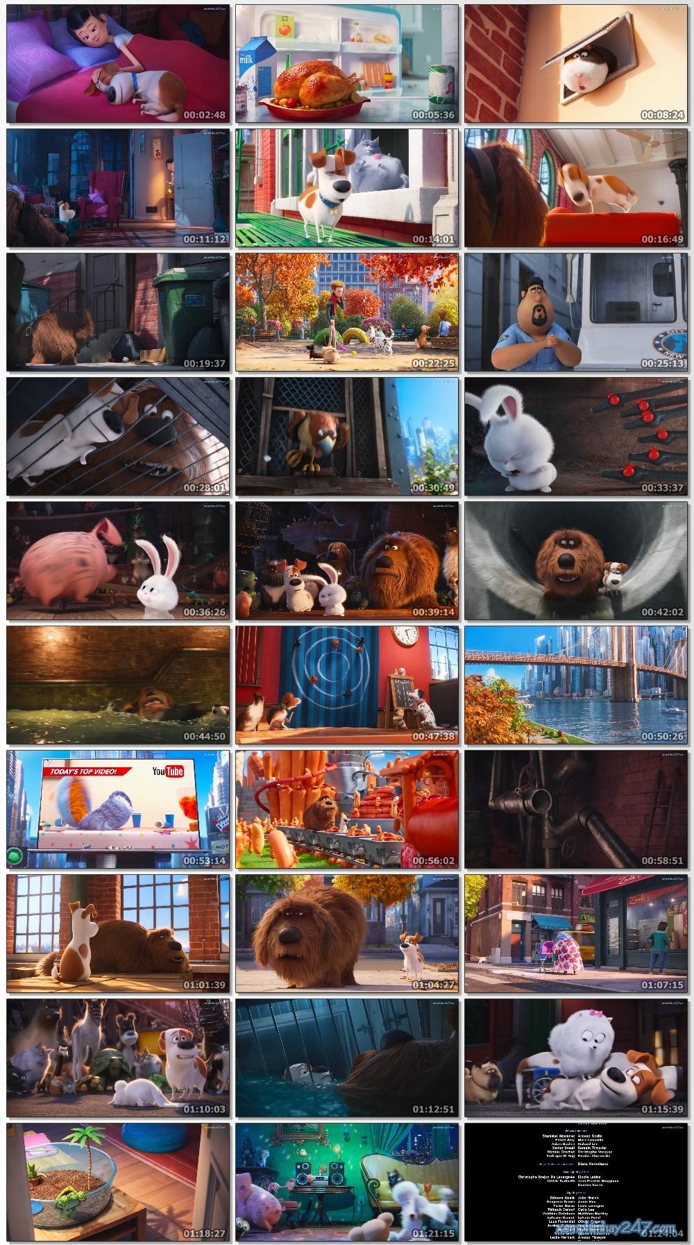 http://xemphimhay247.com - Xem phim hay 247 - Đẳng Cấp Thú Cưng (2016) - The Secret Life Of Pets (2016)