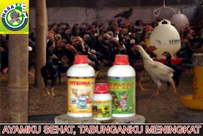 Budidaya Ayam Kampung Super Joper